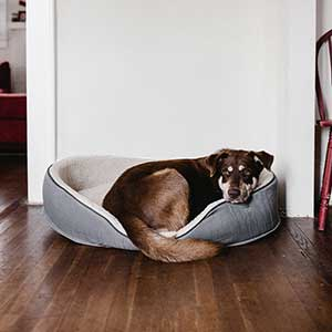 Securing Your Pet's Future if Tragedy Strikes